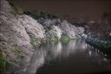 Tokyo Spring Night