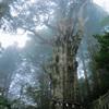 玉置神社の神代杉