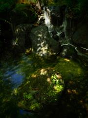 昭和公園にて