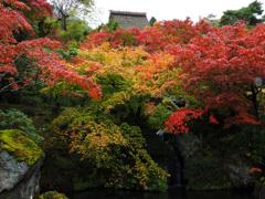 箱根美術館庭園Ⅳ