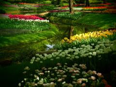 昭和公園の花