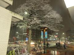 福岡市中央区天神の積雪の様子です①