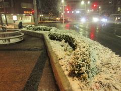 福岡市中央区天神の積雪の様子です③