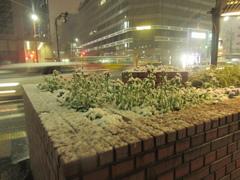 福岡市中央区天神の積雪の様子です④