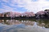 彦根城の春Ⅱ