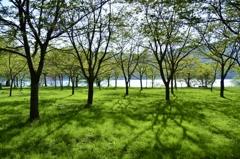 余呉湖畔新緑