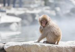 小猿の悩み