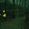 竹林の小路を舞う妖精たち