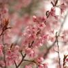 春の訪れ 四天王寺