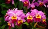 沖縄の花 その8