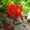 沖縄の花 その5