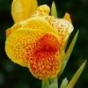 沖縄の花 その2