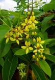 沖縄の花 その6