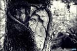 faceな木