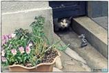 花と蛇口と、そして猫