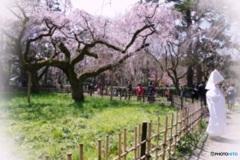 春の佳き日