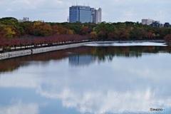 大阪城公園外堀の秋景