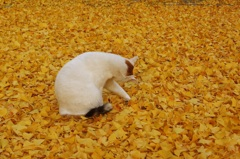 落ち葉の中で身づくろい