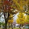 木の葉舞う公園で