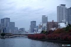 川沿いの桜の紅葉