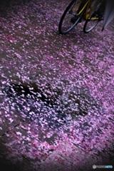 雨上がりの花径