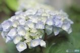 咲き始めた季節花