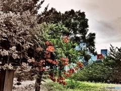 関テレを背に夏の花