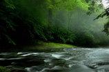 神々が宿る森の清流④
