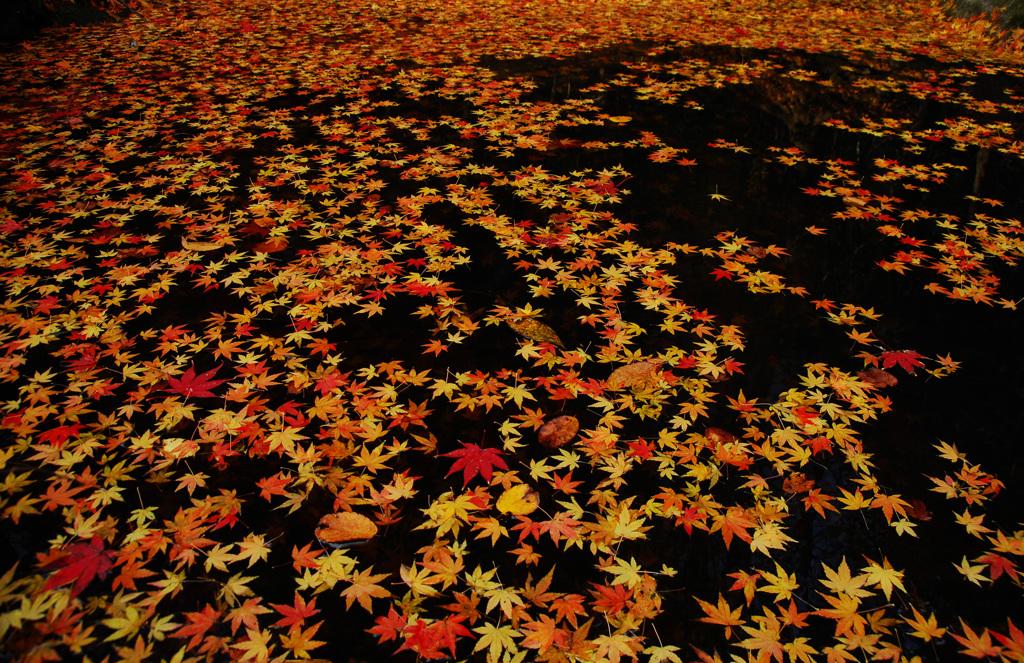 落葉のコンチェルト