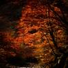 渓谷の晩秋
