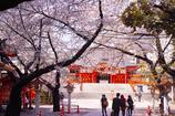 桜 花園神社