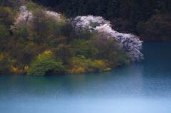 湖岸に咲く
