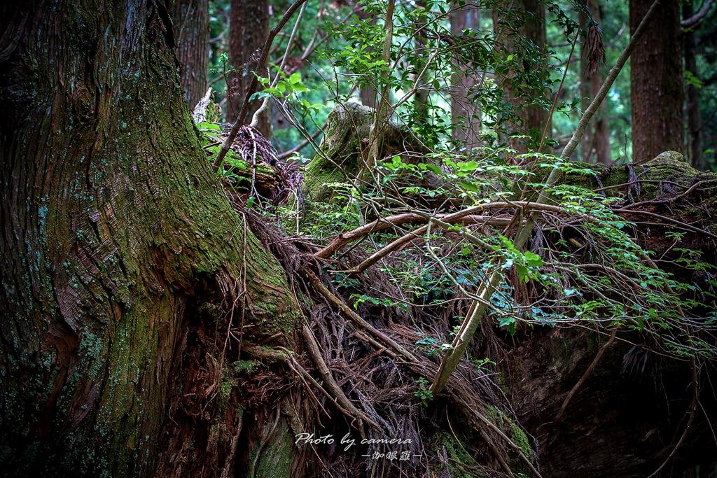 神秘の森 Ⅴ