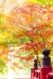 秋の横蔵寺 8