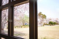 窓越しの春