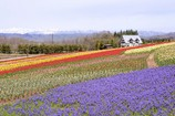 春色の高原 13