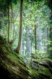 神秘の森 Ⅱ