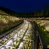 Flower Valley of night - 1
