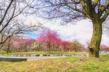 梅の花咲く頃
