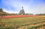 春色の高原 11