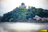 春の犬山城