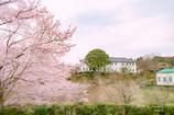 春の明治村 5