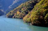 紅葉の徳山湖