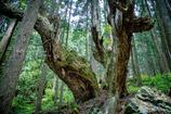 神秘の森 XIII