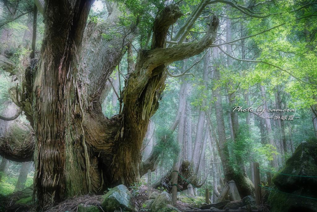 神秘の森 XVI