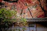 晩秋の横蔵寺 13