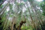 神秘の森 Ⅰ
