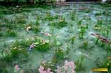 美しすぎる池 1