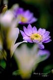 Flower in my garden Ⅴ