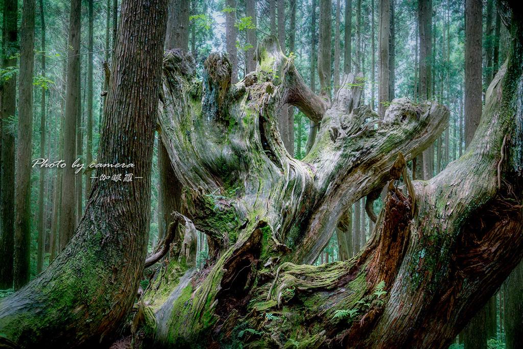 神秘の森 XIV